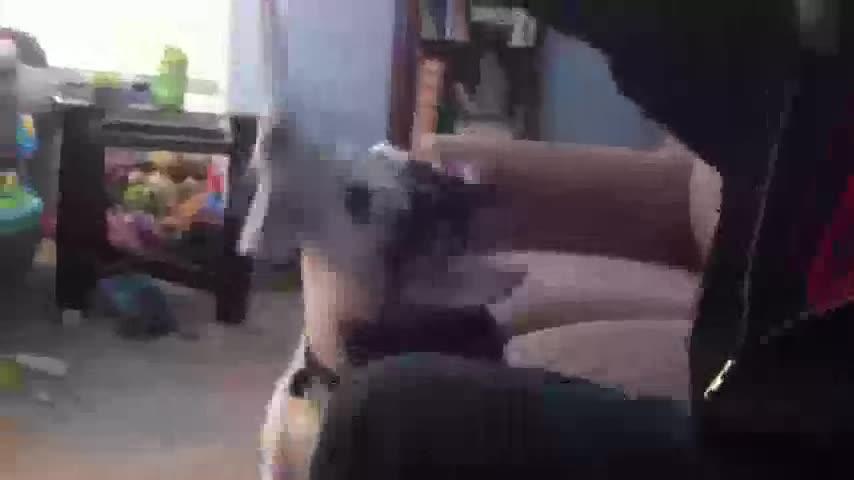 I'm a dog. And I like socks.