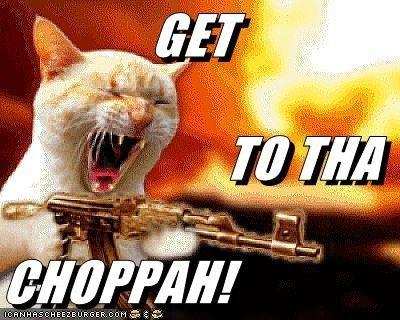 CA cat. . lolcat funny gun kitty cat arnold fire