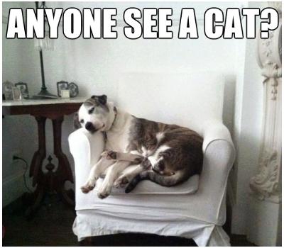 Camo Cat. .. YES cat Dog