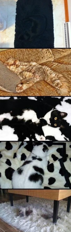 Camouflage Cats. tomorrow iz caturday!. Camouflage Cats tomorrow iz caturday!