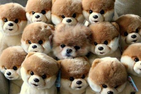 Camuflage Level: Fucking cute :3. Camuflage Level: cute LOL.. Camo level: Grand Master Dog Cute