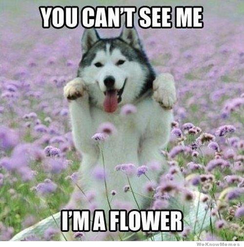 cant see me. . lall / Milt ME cant see me lall / Milt ME