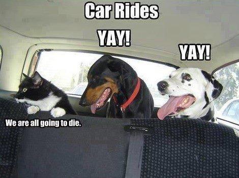 Car Ride or Die?. . We are all Quinn In die, Car Ride or Die? We are all Quinn In die