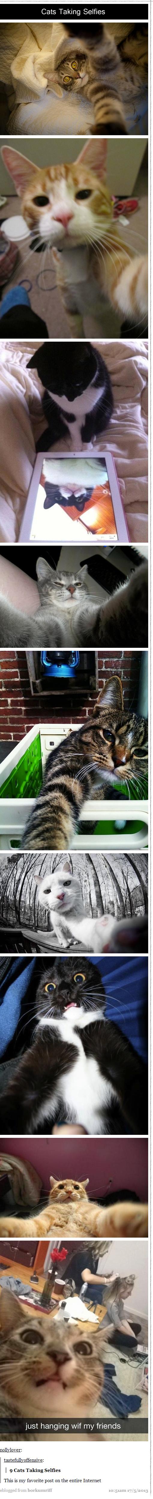 Cat Selfies. .. i fukken love cats Cat Selfies i fukken love cats