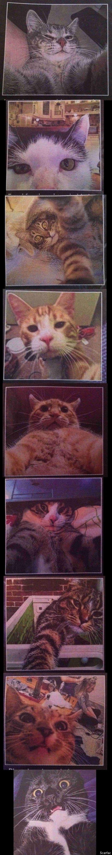 Cat Selfies. .. Cat's expression Cat Selfies Cat's expression
