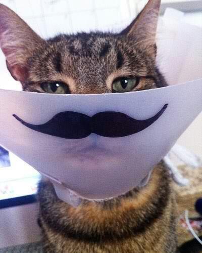 """Cat-stash!. well, how fancy.. """"Quick, hide the stash"""" huehuehuehuehue piss poop"""
