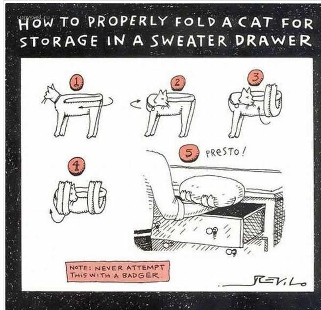 Cat Storage. . How To PROPERLY FOLD ACAT Fem A SWEATER DRAWER Cat Storage How To PROPERLY FOLD ACAT Fem A SWEATER DRAWER