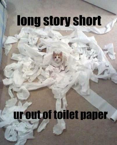 Cat Story. . cat stupid cats niggas nigga Coppercab meme derp derpina OFWGKTADGAFLLBBL