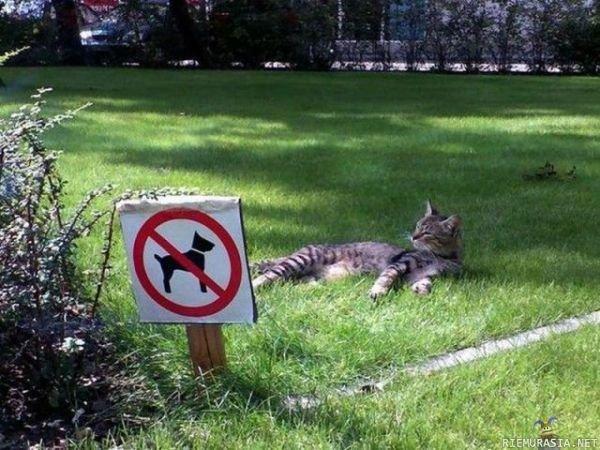 CAT LIKE A BOSS. do it like a boss.. that is a cat! LOL cat like a Boss