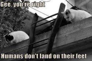 """cat sience. . tmn' t Hill"""" tlel tait THEE cat sience tmn' t Hill"""" tlel tait THEE"""