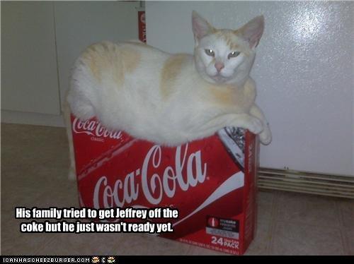 Cat on Coke. . Cat on Coke