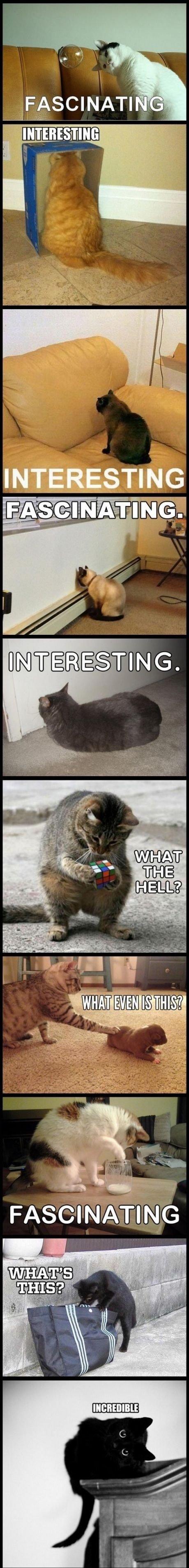 Cats are complex. . Cats are complex