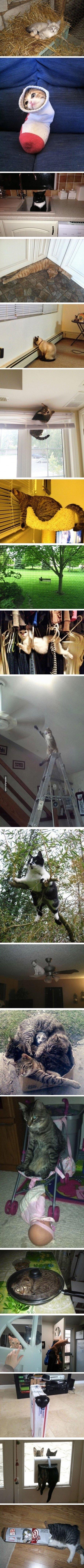 cats are weird sometimes. .. i aint got no legs boy cats are weird sometimes i aint got no legs boy