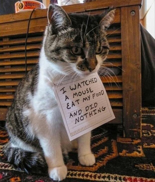 Cats. cats. Cats fuckin
