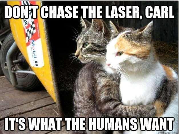 Cats in a nutshell. carrrrrrrrrrrrrrrrrrrrrrrrrrrrrrrrrrrl. DIDN' T THE , CARI irs wnna__ ; wnru punchline