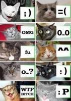 Cats memes. tits. Cats memes tits