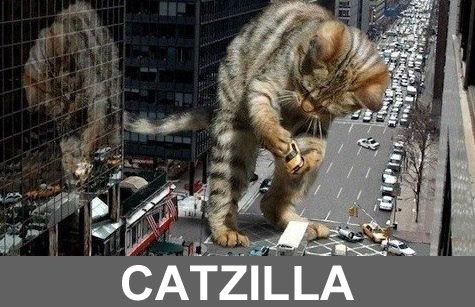 Catzilla. . catzilla