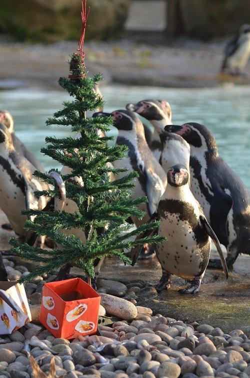 Christmas came early to London Zoo. . Christmas came early to London Zoo