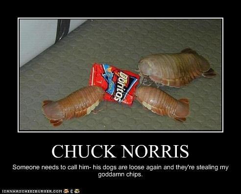 Chuck Norris. Seriously. CHUCK. NORRIS rhea, , e, tls Ito nail hirn- his thigs sari: kvi, e. signin arc] Ehey' re sibiling my goddamn chips chuck norris dog