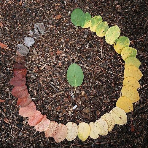 Circle of Life. . Circle of Life
