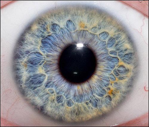 Colorful eye. . Colorful eye