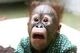 Confused monkey. Confused monkey. confused monkey