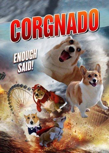 CORGNADO. . CORGNADO