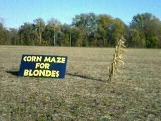 corn maze for blondes. . corn maze for blondes