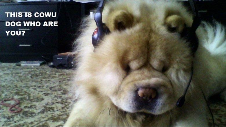 cowu dog. . Dog
