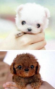 cute. Q. Cute Dog