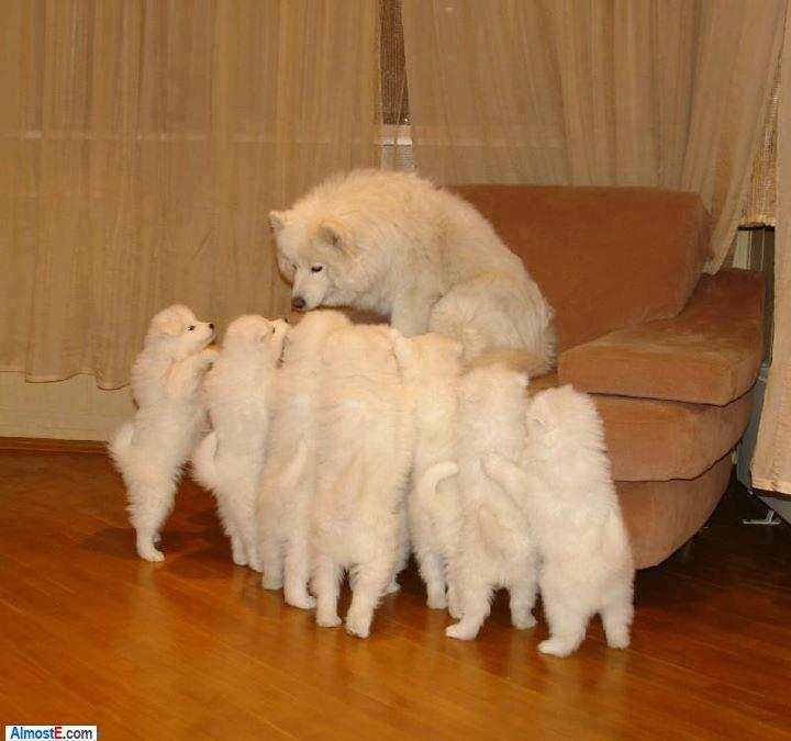 Cuteness overload. . Cute Puppy