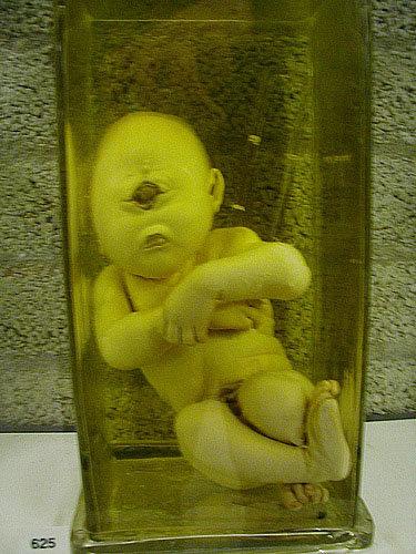 cyclops baby. . cyclops baby