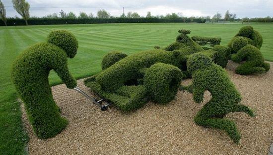 Gardener LADS. . formula one bushes