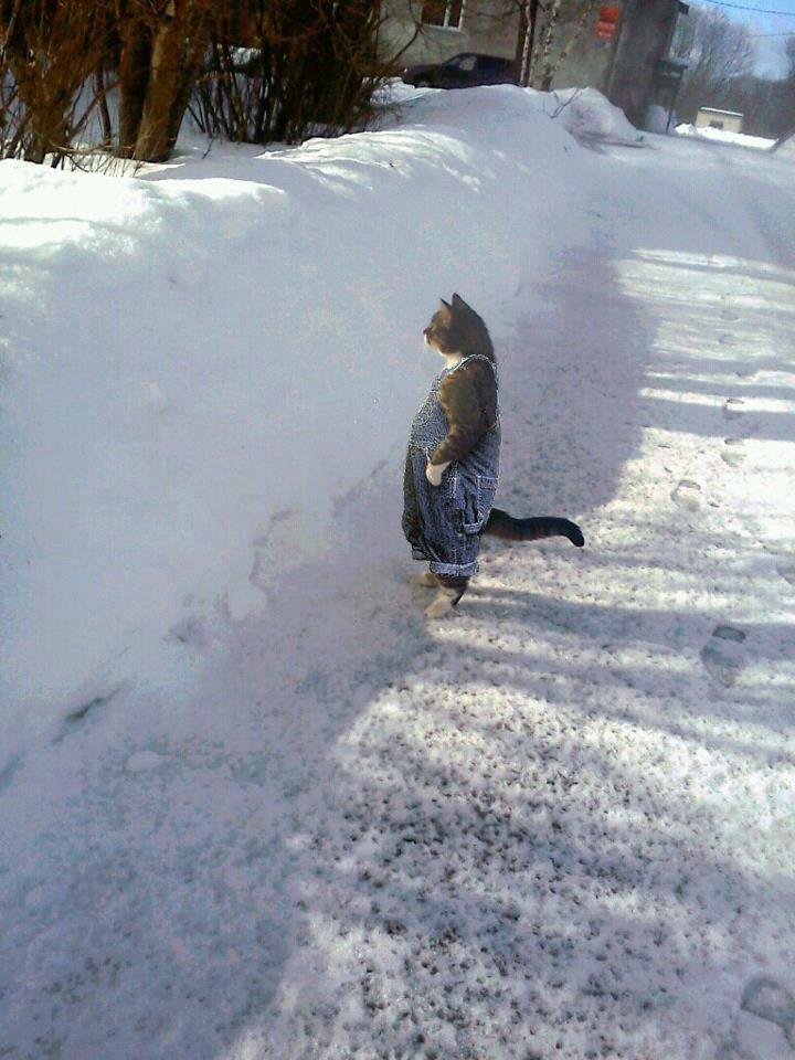 Get meowta this world.... It's a cat.... cat