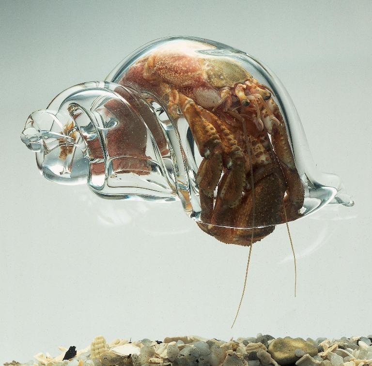 Glass Shell. Lucky . Glass Shell Lucky