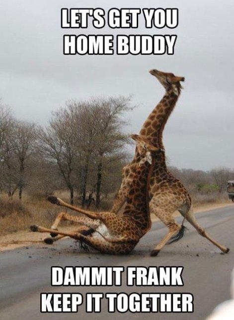 Go home Giraffe, You're drunk.... Description. I' FRANK KEEP IT WHETHER u,,} tags