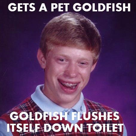 Goldfish. . GETS A PEI GOLDFISH. Alternate version bad luck brian g