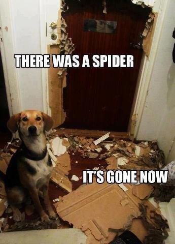Good dog. . Good dog