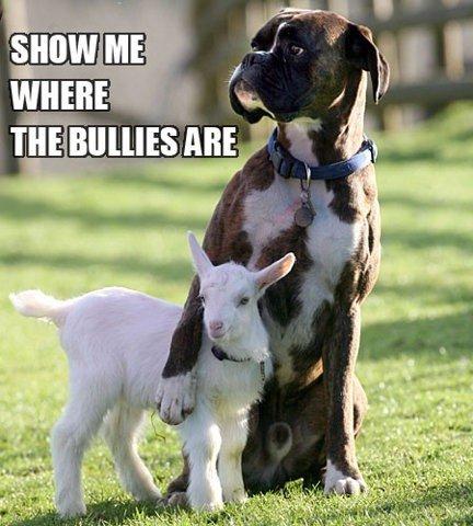 good dog. .. But don't you mean billies? good dog But don't you mean billies?