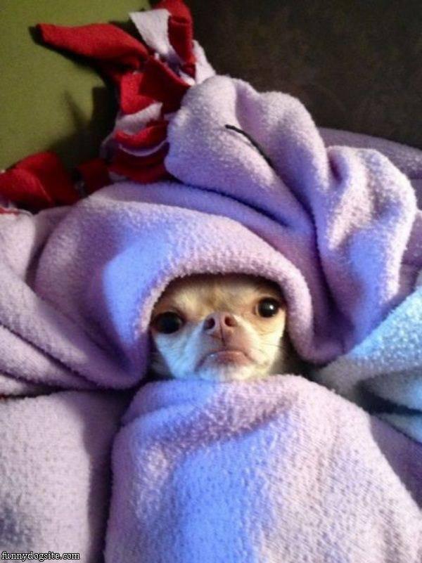 Good Night :). Good Night . Dog pet sleepy funny happy