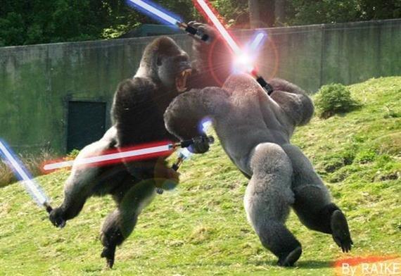 Gorilla Warfare.. . Gorilla Warfare