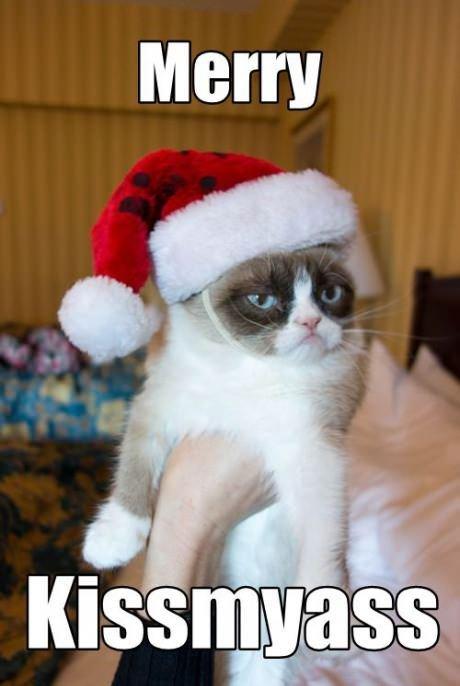grumpy cat. . grumpy cat Christmas Grumpy cat