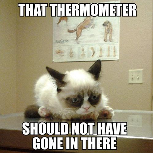 Grumpy cat. . nun IRVINE lit Til Grumpy cat nun IRVINE lit Til
