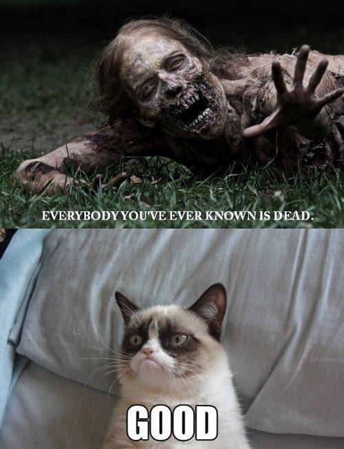 Grumpy cat. . Grumpy cat