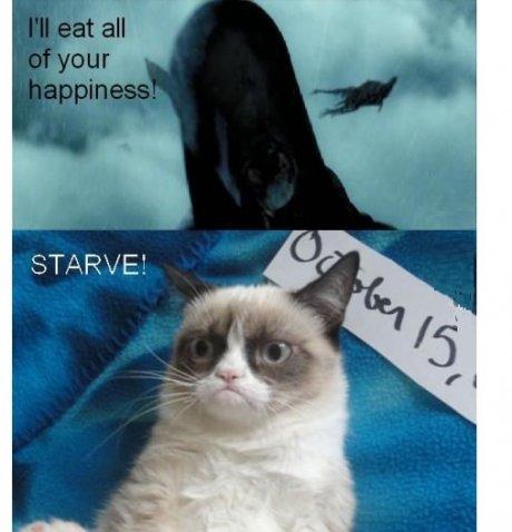 grumpy cat. . STARVE'. grumpy cat STARVE'