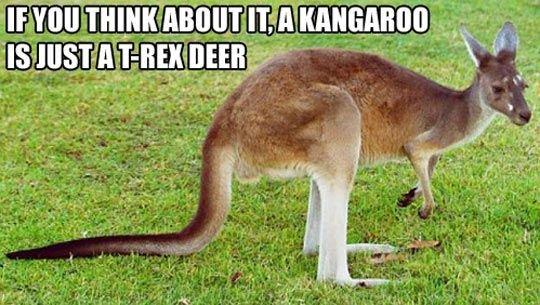Kangaroos. Mind = Blown. Source: imgur.com/gallery/xlQnA13. kangaroos t rex Deer mindblown imgur reddit