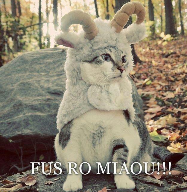 Khajiit. Cats= Internet Not OC.. fus ro nyaa~ Kittyborn