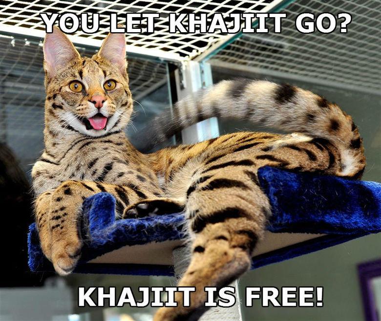 Khajiit Is Free!. . 4, tait'' FREE Khajiit Is Free! 4 tait'' FREE