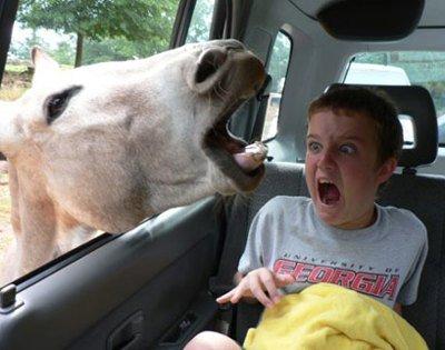 Kid Loves Animals. That kid just himself... that kid looks like he just dem bricks Animals Scared kid funny Llama