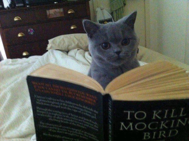Killing Mockingbirds. Source: Imgur.. cats: they're up to something........... Killing Mockingbirds Source: Imgur cats: they're up to something